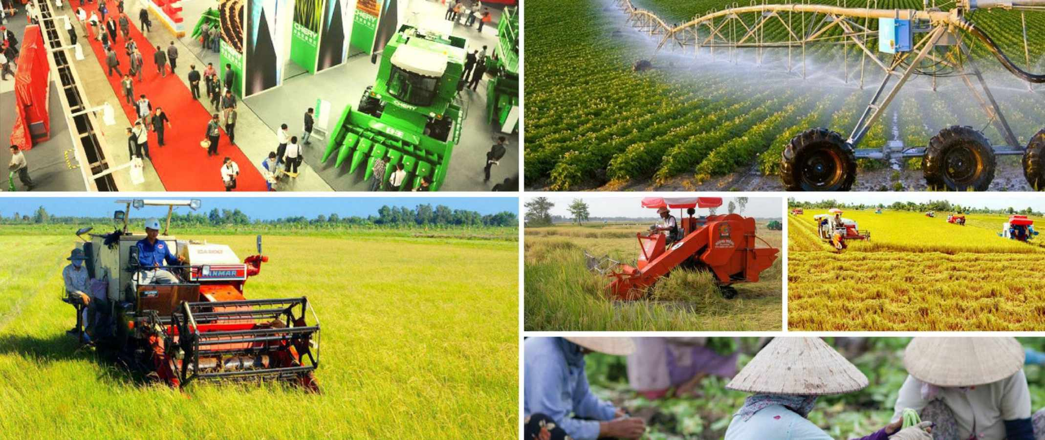 agricol | Definition of agricol at Definify